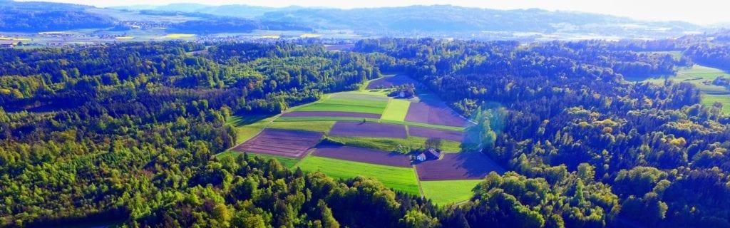 Luftaufnahme Wald