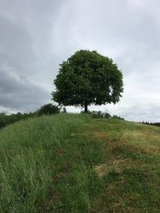 Forst und Wald